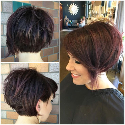 Short Pixie Bob Pictures
